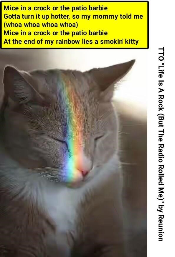 rainbowed cat meme