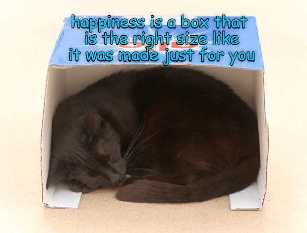 Meme of a cat about happiness being a box that you fit right into.