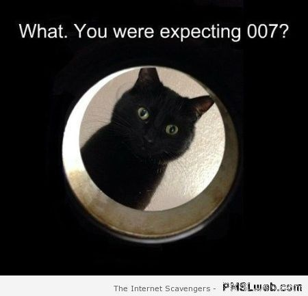 "Funny pic of a cat peeking thru a tube captioned ""did you expect 007?"""