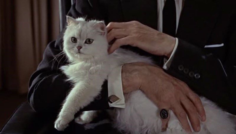 The white fluffy cat from the 007 James Bond movie 'From Russia With Love'