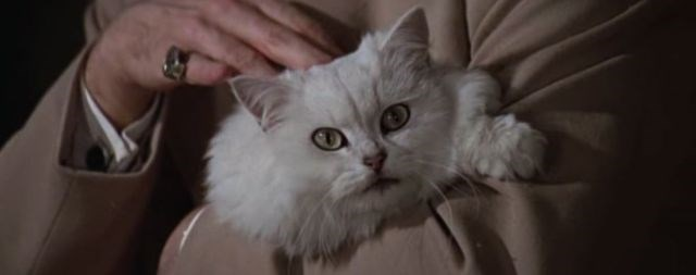 Again a white fluffy cat, this time from the arms of the James Bond villain in You Only Live Twice.