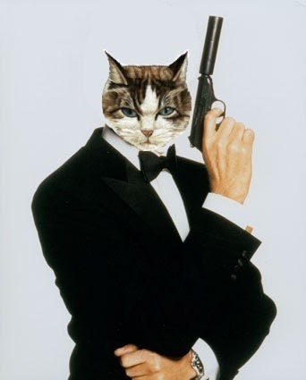 Cat head photoshopped crudely onto James Bond's body.