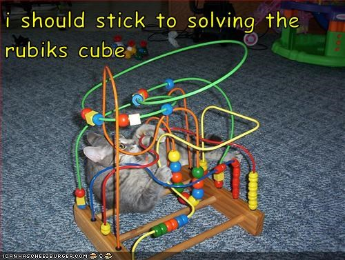 funny meme of cat playing with a kids toy and captioned that he ought to just stick to the Rubik's cube.