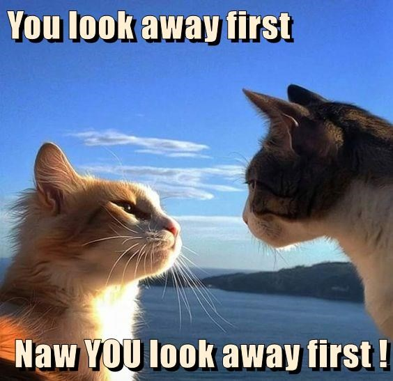 Funny meme of two cats locked in a staring contest that neither wants to loose.