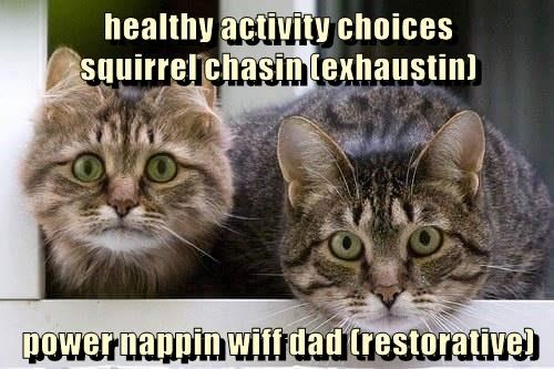 Cat meme about various common cat activities.