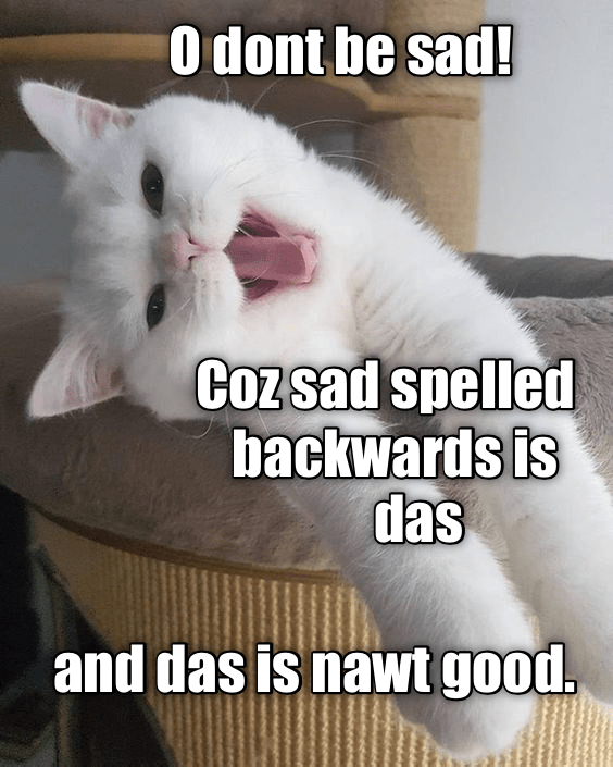 Silly cat meme of a cat saying to not be sad because spelled backwards it is DAS and DAS NAWT GOOD