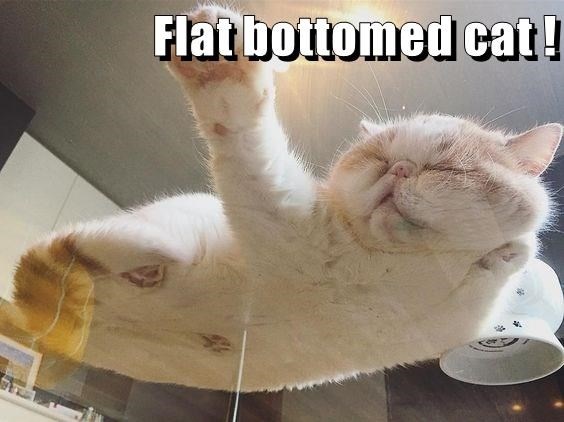 Funny meme of a cat that is all flat bottomed from the glass table he is napping upon.