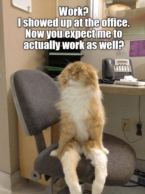 Cat at work meme about needing to do the job after going through all the effort to show up at the office.