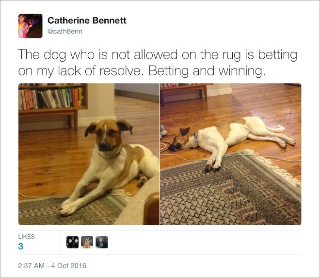 Dog - Catherine Bennett @cath8enn The dog who is not allowed on the rug is betting on my lack of resolve. Betting and winning. LIKES 3 2:37 AM 4 Oct 2016