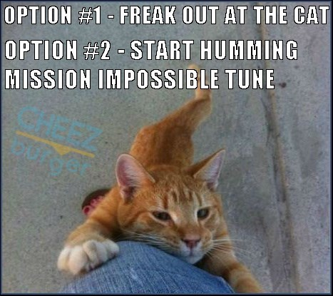 Funny cat meme about what to do when a cat starts to claw his way up your leg.