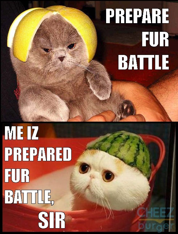 Meme of cats wearing funny fruit peels on their head as if they are helmets for cat soldiers.