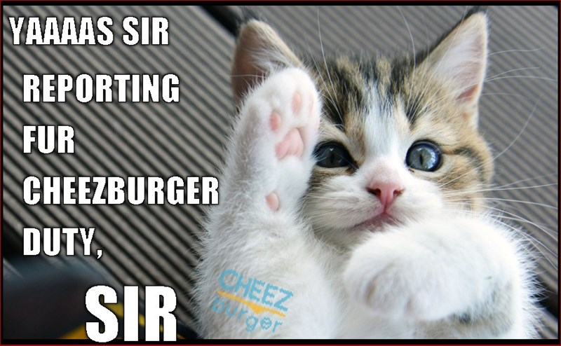 Funny cat standing at salute made into a meme with caption as if he is a Cheezburger soldier.