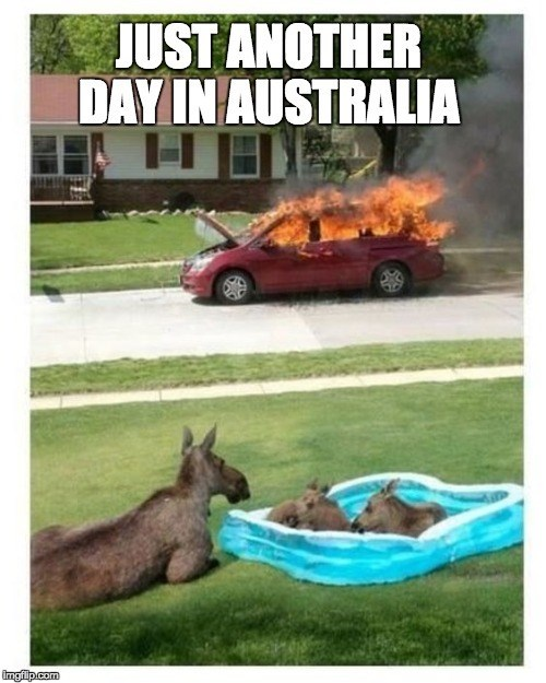 A funny meme of a car burning in Australian heat and kangaroos enjoying a pool