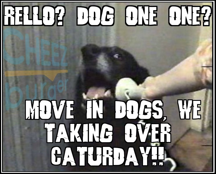 Hello This Is Dog Meme with dog calling emergency to tell the other dogs to take over Caturday.