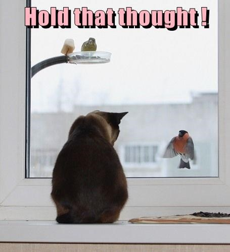 Cat looking out the window and seeing a bird at just the right moment.