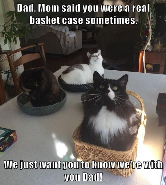funny pic and meme of a bunch of cats in baskets on the table