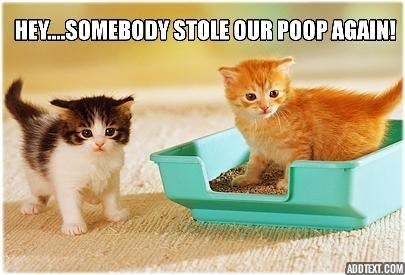 Funny cat meme of 2 kittens who are asking about who stole their poop out of the kitty litter, AGAIN.