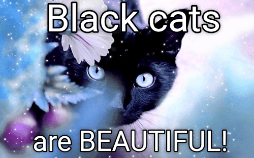 Meme about how black cats are just beautiful