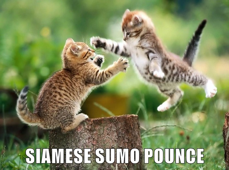 Cat meme of two kittens engaged in Matrix style fight.