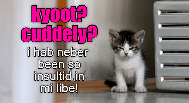 Meme of a cute kitten being offended that you called him cute and cuddly.
