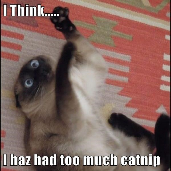 Meme of a cat that may have taken too much catnip...
