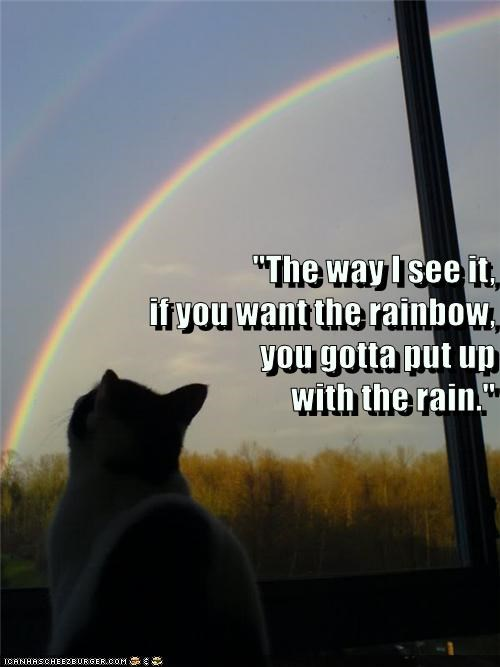 Very wise cat meme of a kitty looking at a rainbow and a caption about how you gotta put up with the rain to get a rainbow.