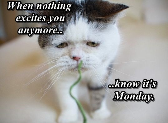 Sad meme about nothing being exciting anymore brutally even more sad after pointing out that it is Monday