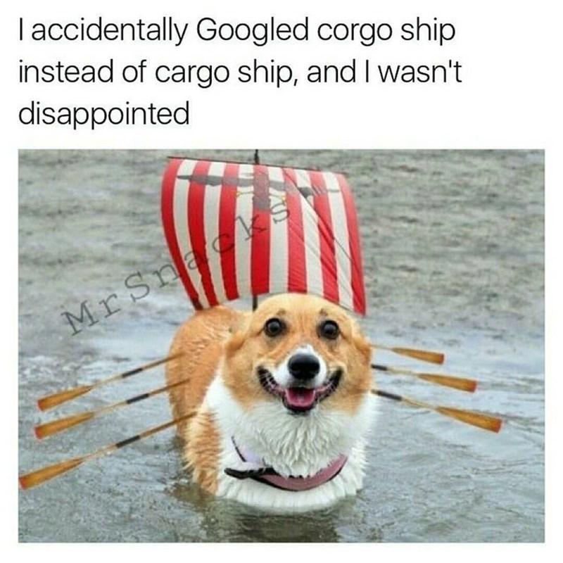 Meme about a corgi pirate ship, very funny.