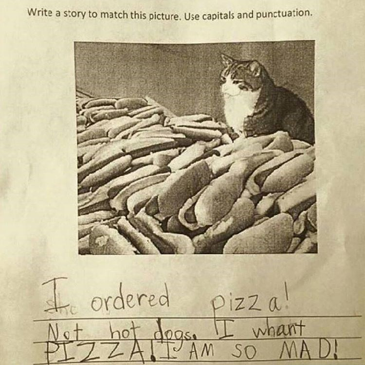 Funny meme about a cat surrounded by hot dogs.