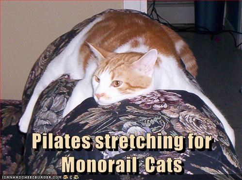 Cat stretching out into monorail mode.