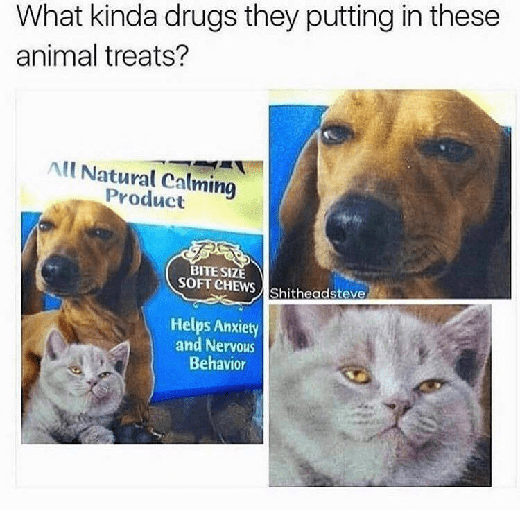Funny meme about what kind of drugs a dog and cat treat company puts into their anti-anxiety treats because they look super stoned on the package.