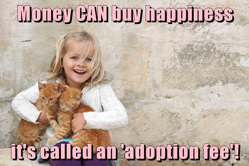 Meme about money buying happiness and it is called an 'adoption fee'