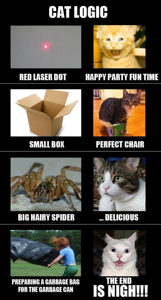Cat - CAT LOGIC RED LASER DOT HAPPY PARTY FUN TIME PERFECT CHAIR SMALL BOX BIG HAIRY SPIDER DELICIOUS THE END IS NIGH!! PREPARING A GARBAGE BAG FOR THE GARBAGE CAN