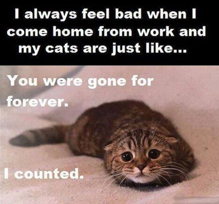 Cat - I always feel bad when I come home from work and my cats are just like... You were gone for forever. I counted.