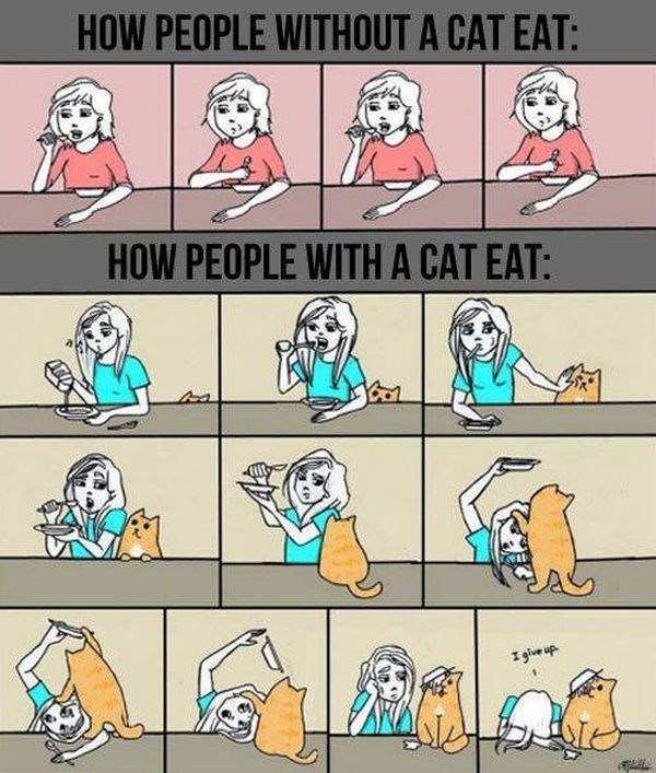 Cartoon - HOW PEOPLE WITHOUT A CAT EAT: HOW PEOPLE WITHA CAT EAT: give up