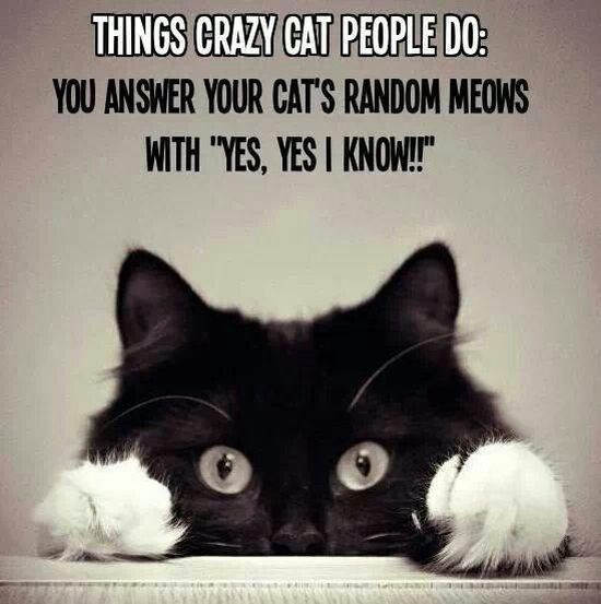 "Cat - THINGS CRAZY CAT PEOPLE DO: YOU ANSWER YOUR CAT'S RANDOM MEOWS WITH ""YES, YES I KNOW!"""