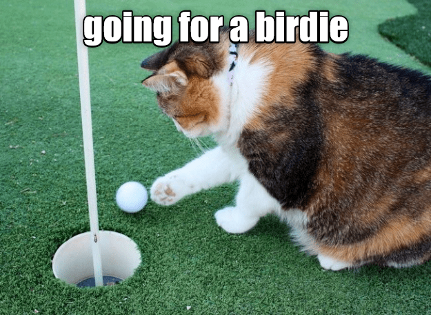 Cat birdie that golf ball right into the hole