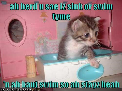 Sink or Swim time for the cat, but since he can't swim he will just stay right here.