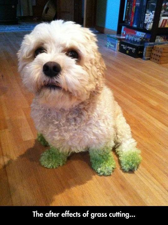 Dog - The after effects of grass cutting...