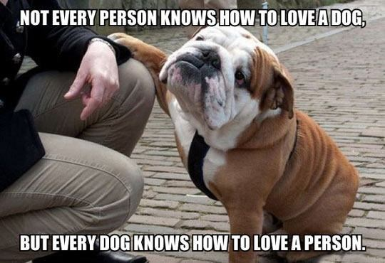Dog - NOT EVERY PERSON KNOWS HOW TO LOVEADOG, BUT EVERY DOG KNOWS HOW TO LOVE A PERSON