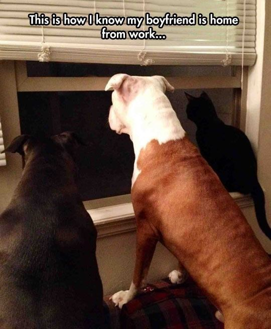Dog - This fs how Iknow myboyfriend is home from work...