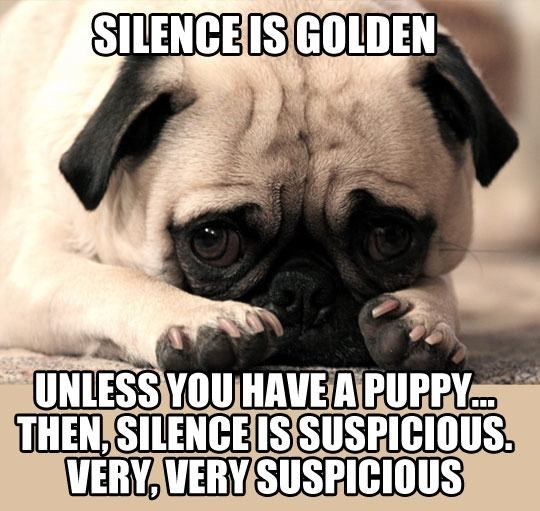 Pug - SILENCE IS GOLDEN UNLESS YOU HAVEAPUPPY THEN,SILENCE ISSUSPICIOUS. VERY, VERY SUSPICIOUS