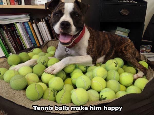 Dog - Tennis balls make him happy a
