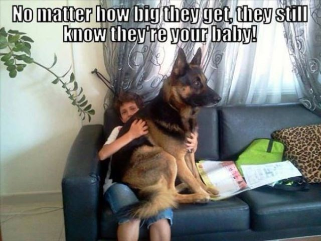 Dog - No matter how big they get, they stll Kmow theyre your baby! A
