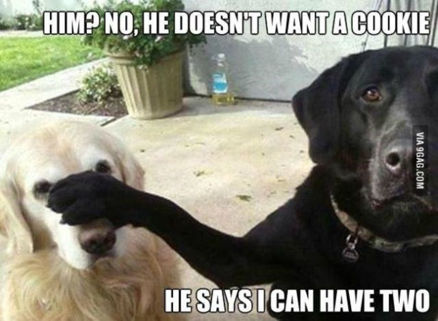 Dog - HIMP NO HE DOESNT WANT A COOKIE HE SAYSICAN HAVE TWO VIA 9GAG.COM