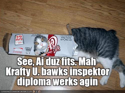 Another funny Krafty Diplomas cat meme