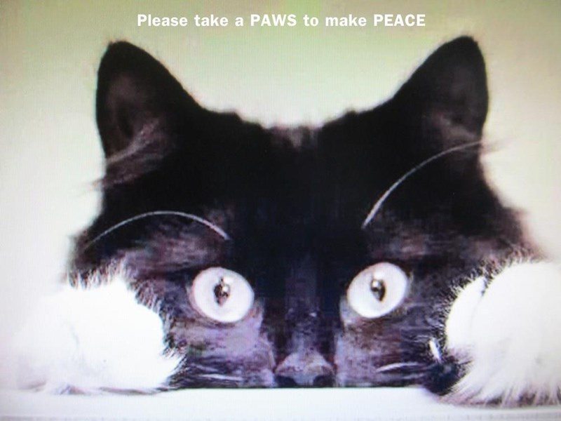Paws for peace cat meme