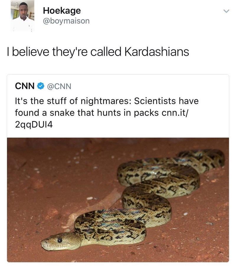 Funny Twitter meme about scientists discovering snakes that hunt in packs, tweet compares to the Kardashians.