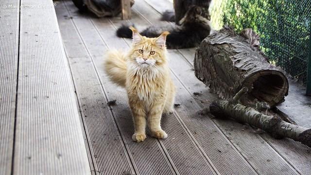 Cat - M