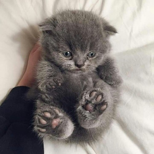 Very cute kitten with adorable look on his face.